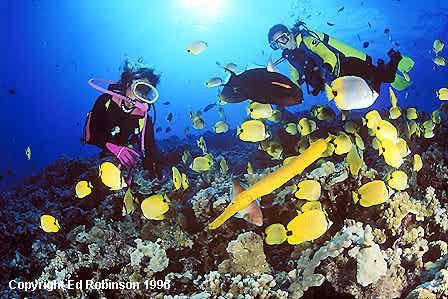 Scuba Molokini | Scuba Diving Molokini | Scuba Diving Maui